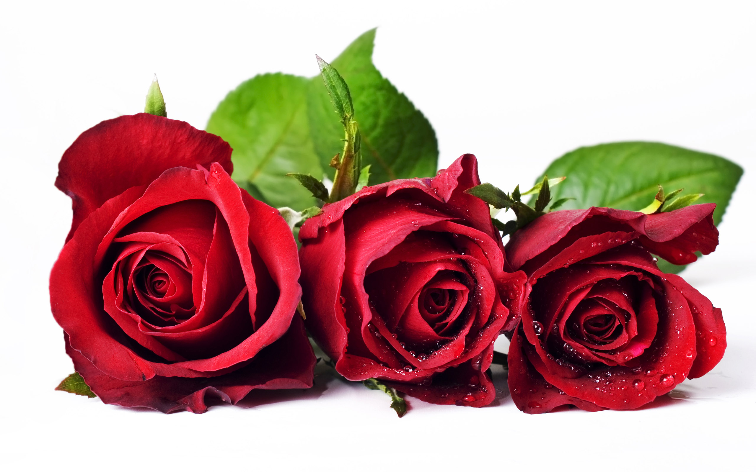 Beautiful roses hd wallpapers flowers wallappers free - Red rose flower hd images ...
